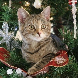 We are here for all of your holiday pet sitting needs!