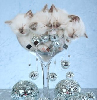 The staff at Gentle Pet Protectors wishes everyone a happy, healthy and prosperous New Year!