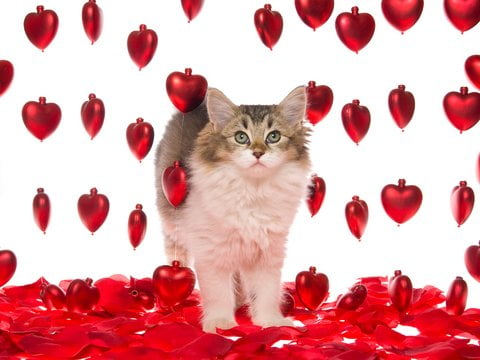 Show them some love with a visit from Gentle Pet Protectors!