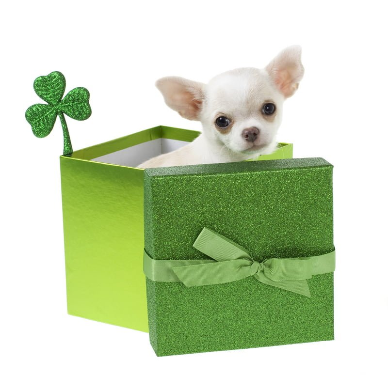 The luckiest pets are cared for by Gentle Pet Protectors!