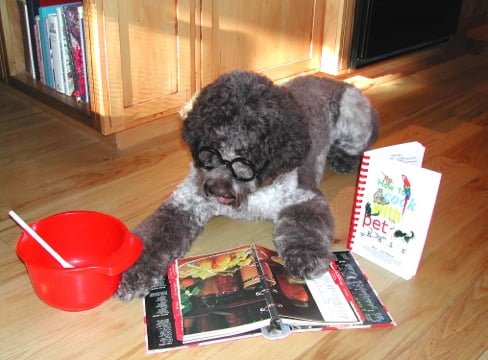 Zelda enjoys reading cookbooks when she's not helping the kids!