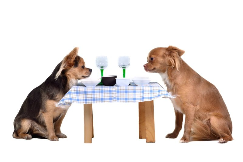 ......or a special dinner out, call us for your pet care needs!