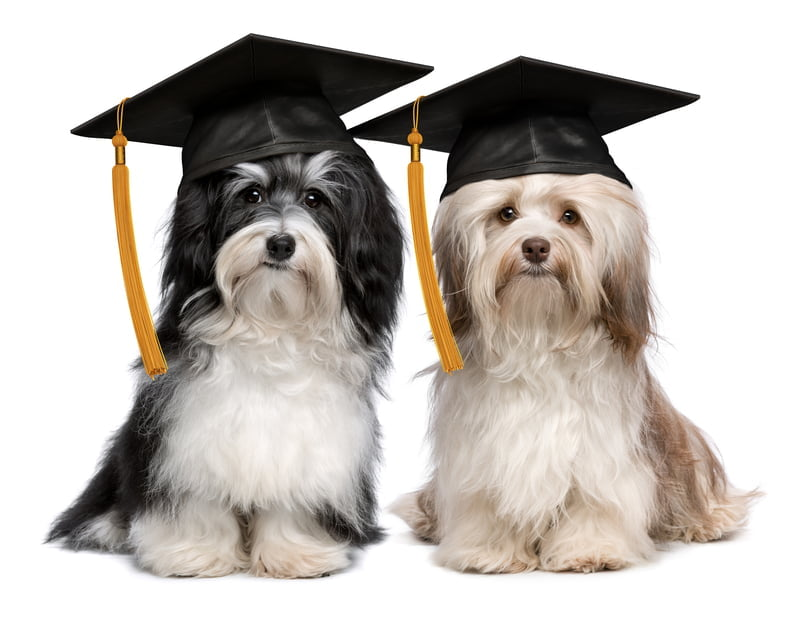 ......and Grads - call GPP if you are away for a big event!