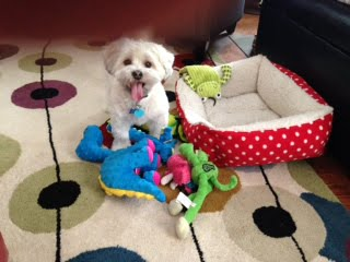 We can pick up some new toys for your pet.