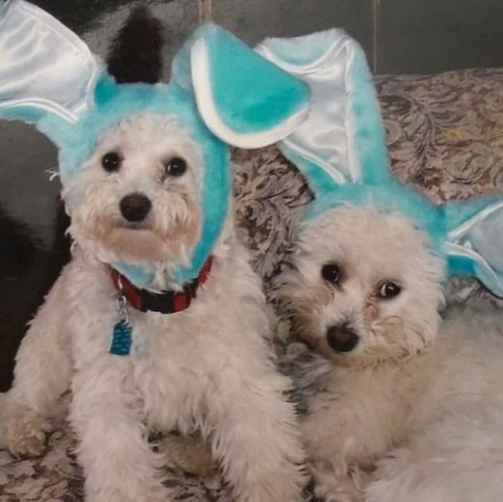 The Easter puppy is coming soon!