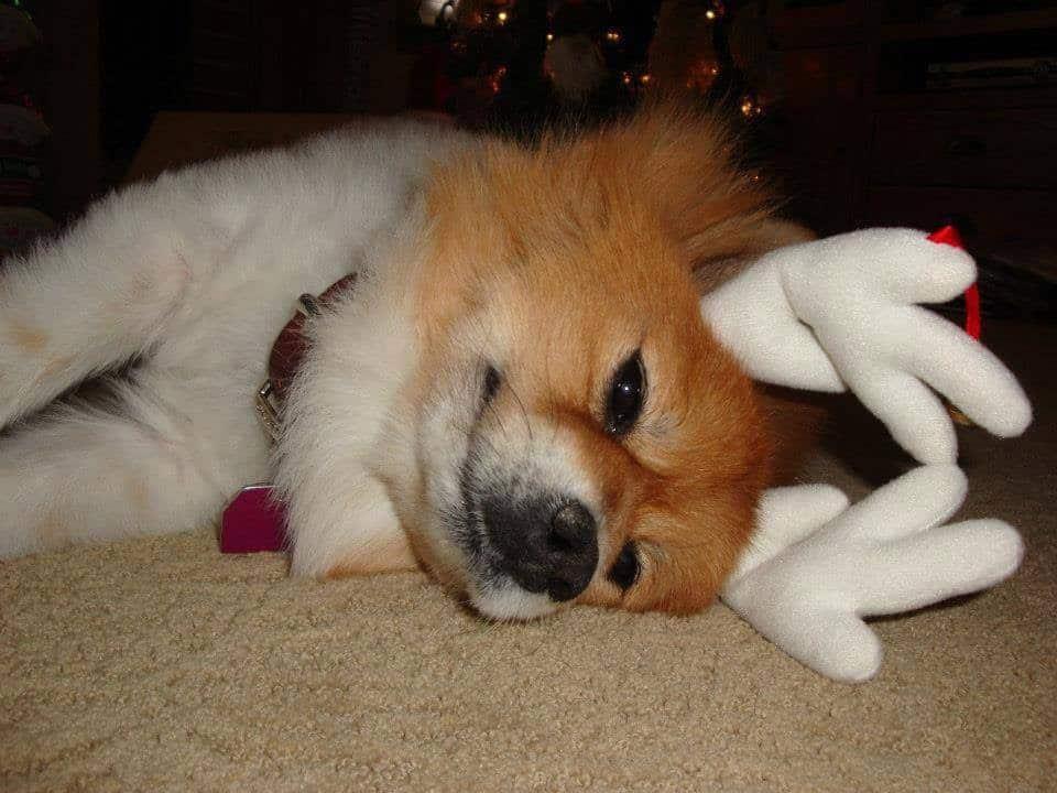 .....call Gentle Pet Protectors for help!