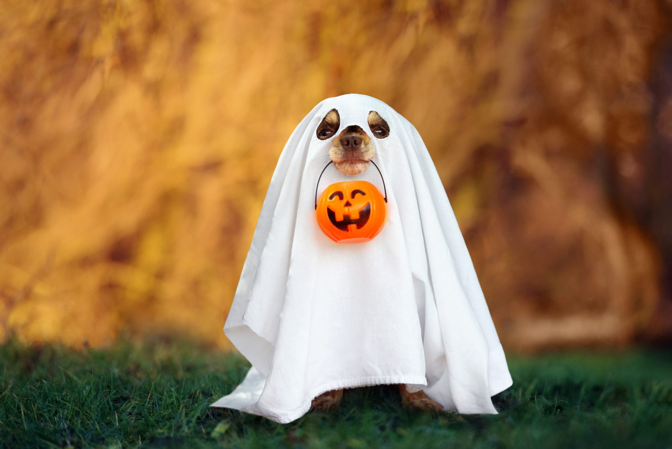 Beware of ghosts with cold noses!