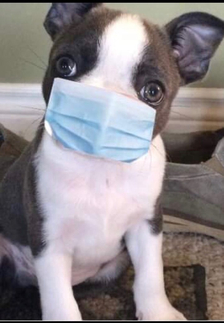 At Gentle Pet Protectors, we take every safety precaution!