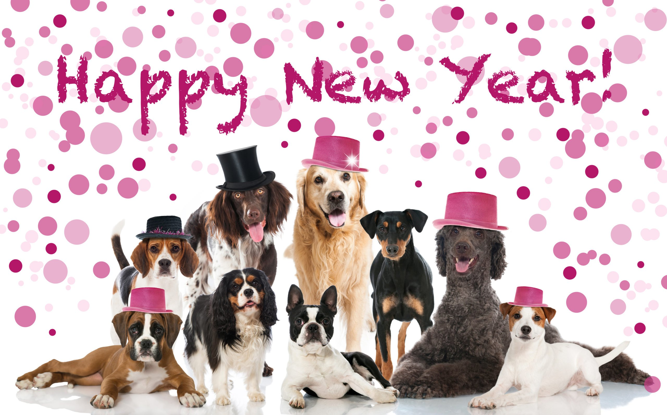 Wishing everyone a healthy and safe New Year!